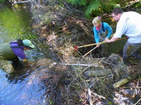 Breaching the Beaver Dam
