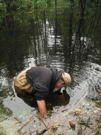 w trout ken hall beaver culvert 4 IMG_6917