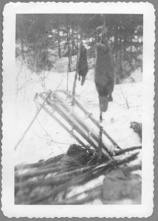 Beavers and Sled
