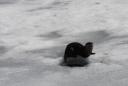 Otter, Guarding Crayfish