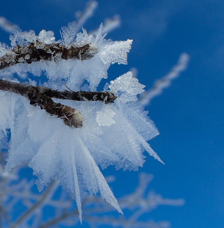Hoar Frost on Apple Twig