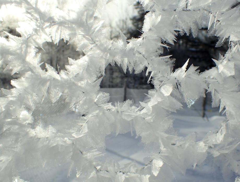 Hoar Frost on Poultry Netting